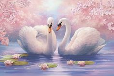 Good Afternoon sister have a relaxing time,xxx ❤❤❤ Swan Pictures, Bird Pictures, Nature Pictures, Swan Painting, China Painting, Bird Art, Beautiful Paintings, Beautiful Birds, Pet Birds