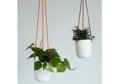 The Sill's Burbank hanging potted plants on Lucky Magazine