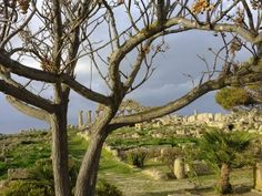 Sicily (Olive Grove's Place).