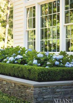 Boxwood Garden, Hydrangea Landscaping, Home Landscaping, Front Yard Landscaping, Boxwood Hedge, Residential Landscaping, Privacy Landscaping, Garden Plants, Landscape Edging
