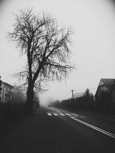 #blacknwhite #blackandwhite #black&white #black #white #tree #street #fog #world #blackandwhiteworld