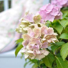 Wir lieben Hortensien und jetzt ist die schönste Zeit!! Happy Friday ....#blumengrüsse