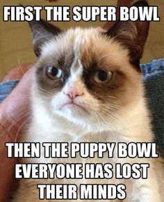 Super Bowl & Puppy Bowl - Grumpy Cat is not Impressed! | Everyone Has Lost Their Minds? | @complex.com