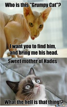 40 Grumpy Cat Memes That You Will Love! - Sarcasm Meme - Sarcasm Meme ideas - 40 Grumpy Cat Memes That You Will Love! Funny Cat Quotes The post 40 Grumpy Cat Memes That You Will Love! appeared first on Gag Dad. Grumpy Cat Quotes, Funny Grumpy Cat Memes, Cat Jokes, Stupid Funny Memes, Funny Cats, Angry Cat Memes, Funny Quotes, Grumpy Cat Images, Cat Humour