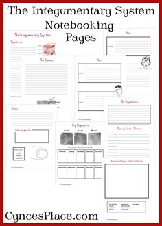 Integumentary System Notebooking Pages
