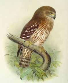 If you're ever in doubt of nature's glory, look at these amazing vintage bird pictures that feature incredible color and detail. Vintage Bird Illustration, Owl Illustration, Illustrations, Bird Free, Vintage Birds, Vintage Clip, Owl Print, Bird Drawings, Bird Pictures