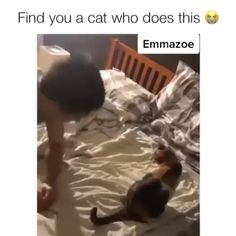 Funny cats compilation 2016 Best funny cat videos ever by Funny Vines.Hope you like a new funny cat videos compilation funny cats and silly cats . Cute Funny Animals, Cute Baby Animals, Funny Cute, Animals And Pets, Cute Cats, Funny Kitties, Funny Pics, Hilarious, Cute Animal Videos