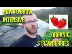 Adama Organic Gardens: http://pakarakafarm.co.nz/about/ For more detailed information like this check out my online course: www.profitableurbanfarming.com An...