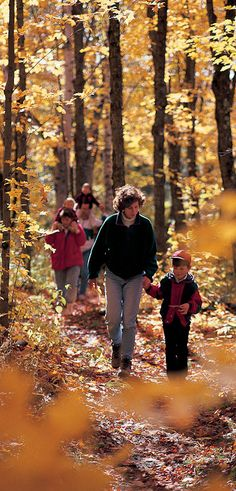 Hike the Superior Hiking Trail and enjoy beautiful fall colors in Minnesota Autumn Trees, Autumn Forest, Fun Fall Activities, Autumn Walks, Life Is A Journey, Autumn Garden, Amazing Destinations, Hiking Trails, The Great Outdoors