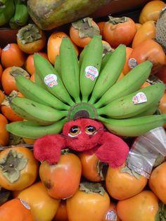 Pincette reine des mini banane