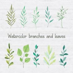 Watercolor branches and leaves Free Vector