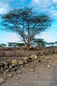 Manyatta under acacia tree,  Olturot, Marsabit, Northern Kenya.