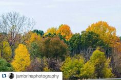 #Repost @jambrinaphotography with @repostapp To get featured tag your post with #Talestreet Thank you to all my supporters. Your positive feedback keeps me going everyday. 1K. #jambrinaphotography #nikon #nikontop #nikonofficials #nikonphotographers #fall #autumn #fallcolors #trees #nature #twitter  #world_photography_club #world_photography_club #talestreet #topshelf_shots #naturephotography #falltime #NatureGlobePix @nature.globepix @nikontop #photographicsociety #features #photographers…