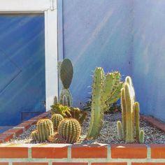 Cactus planter, Alcatraz Ave, Berkeley #cactus #succulent #berkeley #garden #oakland #cactusgarden