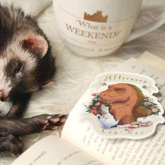Afternoon Tea-Rex sticker by @toastzombie available on Redbubble! ☕️ . . What are your weekend plans? I'm off to see the new Spider-Man movie! . . . #thebookferret #books #bookstagram #bookworm #booknerd #bookpets #bookaddict #bookphotography #bibliophile #instabooks #ferret #instaferret #ferretsofinstagram #petsofinstagram #bookstagramfeature #afternoontearex #toastzombie #kristenbernabe #whatisaweekend #quigley #ferretfriday