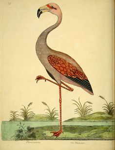 """A natural history of birds"", antique ornithology print. Biodiversity Heritage Library."