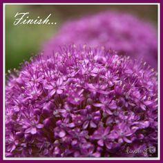 LÖwin.g: Allium 3 ...