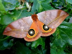 Silkmoths and more: June 2014