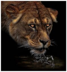 At night at the watering hole by Klaus Wiese / 500px