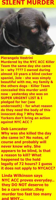 SILENT MURDER 8-21-2017 ---  SUPER URGENT Brooklyn Center LATIVIA – A1122787  FEMALE, BLACK, AM PIT BULL TER MIX, 10 yrs STRAY – EVALUATE, NO HOLD Reason STRAY Intake condition EXAM REQ Intake Date 08/21/2017  http://nycdogs.urgentpodr.org/lativia-a1122787/