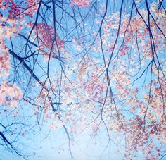 morning pink and blue