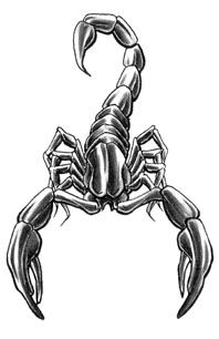 Grey Ink Scorpio Tattoos Designs