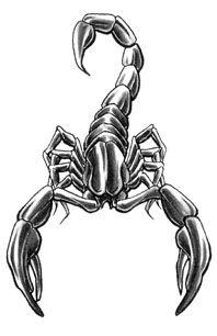 Grey Ink Scorpio Tattoos Designs