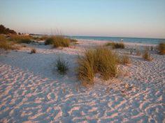 Sea oats at Anna Maria Island Beach
