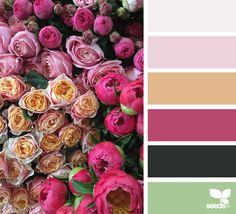 Flora Palette - http://www.design-seeds.com/flora/flora-palette-14