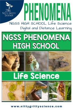 This LIFE SCIENCE PHENOMENON download is a collection of short videos and images designed to give teachers quick and easy access to an observable event or phenomena, that is aligned to the HIGH SCHOOL Life Science Next Generation Science Standards (NGSS).