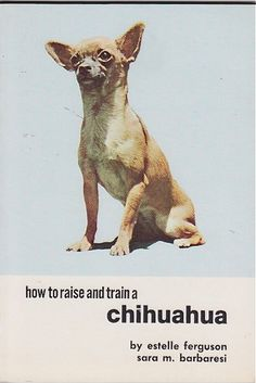 How to Raise and Train a Chihuahua