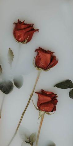 Cute Wallpaper Backgrounds, Pretty Wallpapers, Flower Wallpaper, Aesthetic Roses, Aesthetic Drawing, Aesthetic Vintage, Aesthetic Pastel Wallpaper, Aesthetic Wallpapers, Iphone Homescreen Wallpaper