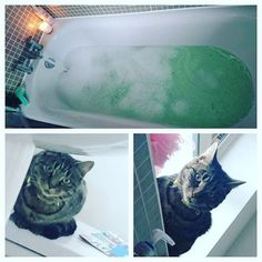 Nice relaxing bath... Definitely don't feel like I'm being watched...  #catsofinstagram  #cat #cats #kitty #thatsdarling #cute #funny #instapic #instagood #instagrammers #instadaily #katiecupcakelifewithme