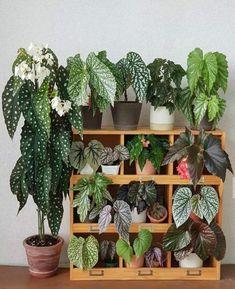 House Plants Decor, Plant Decor, Indoor Garden, Indoor Plants, Plantas Indoor, Decoration Plante, Pot Plante, Plants Are Friends, Office Plants