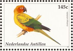 Sun Parakeet stamps - mainly images - gallery format