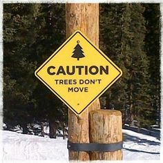 Trees don't move