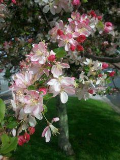 Springtime love