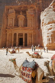 Petra Treasury with Camels - discover 5 practical tips to visit Petra and make the most of your visit, including things to see in Petra and Petra facts & curiosities!