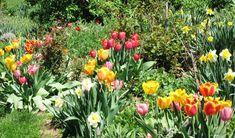 A Beautiful Spring Garden