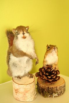 taxidermy-sick, but I would still like to have...