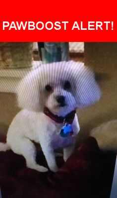 Please spread the word! Snoopy was last seen in San Antonio, TX 78251.  Description: While Male Poodle  Nearest Address: 2327 Mission Forest, San Antonio, TX, United States