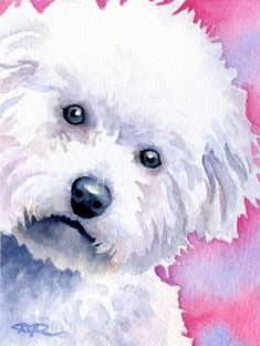 BICHON FRISE Dog Watercolor Art Print Signed by Artist DJ Rogers. $12.50, via Etsy.
