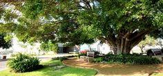 la rioja residencial guadalajara - Buscar con Google