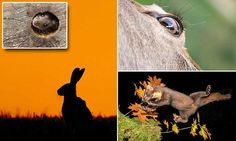Incredible photos capture the amazing mammals of the British Isles #DailyMail