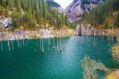 El bosque sumergido del lago Kaindy En Kazajistán se encuentra un lago único en el mundo.  El motivo de su singularidad es el bosque de árboles sumergidos que hay en sus aguas. Son ejemplares de Picea schrenkiana que quedaron anegados por un enorme deslizamiento de tierra, provocado por el terremoto de Kebin de 1911.