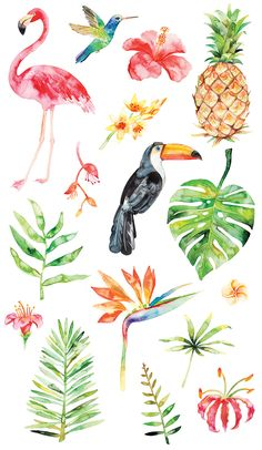 This article is not available - Watercolor tropical clipart summer flamingo flower pineapple - Watercolor Clipart, Watercolor Bird, Watercolor Pattern, Watercolor Paintings, Pattern Drawing, Watercolor Stickers, Drawing Drawing, Watercolor Illustration, Pineapple Watercolor