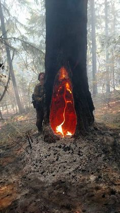 The fire inside this tree has been burning for 5 days.
