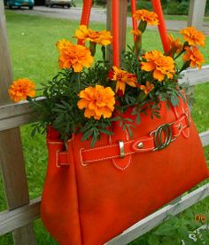 More Amazing Summer Time Flowers Buy a brightly colored purse at Goodwill or a yard sale or at Walmart at the end of summer sale and plant Marigolds in it!! (My friend,Judith W. would love this orange one)!!