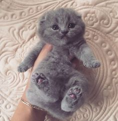 Ready For Belly Rubs