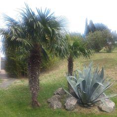 #mediteranean #outdoors #naturelovers #nature #agave #palma #cactus #cactuslover #park #парк #portoroz #portorose #slovenia #словения #ig_slovenia by boruthocevar March 21 2016 at 03:45PM